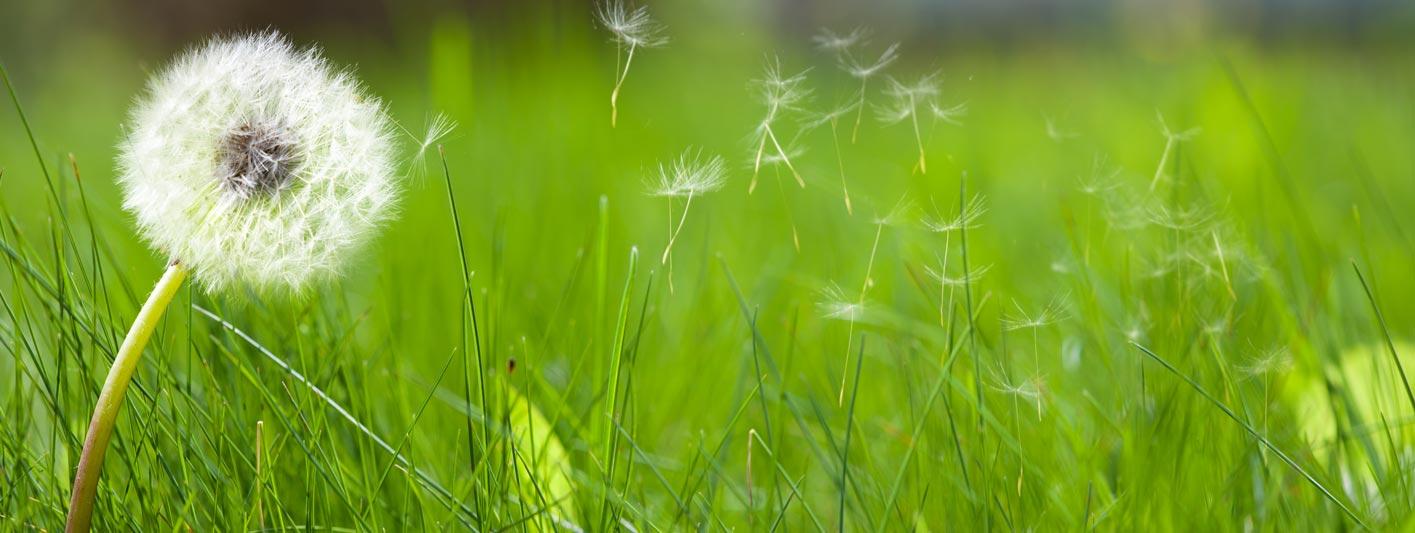 Weeds banner