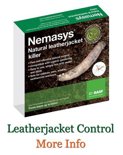 Leatherjacket Control