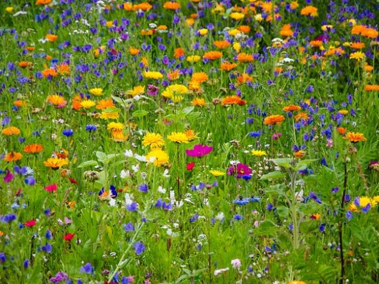 Wildflower Meadow